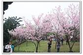 陽明山花季:IMG_5571.JPG