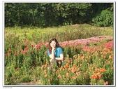 大屯花卉農場:DSC08776.JPG