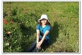 大屯花卉農場:DSCF2571.JPG