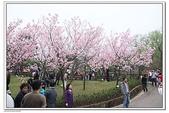 陽明山花季:IMG_5570.JPG