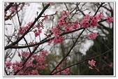 陽明山花季:IMG_5525.JPG