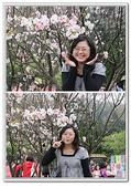 陽明山花季:p7.jpg