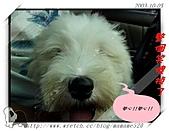 2003~出遊:2003-10-05-009.jpg