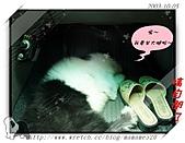 2003~出遊:2003-10-05-011.jpg