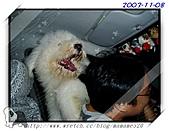 2003~出遊:2003-11-08-013.jpg