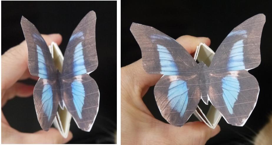 蝴蝶:bb09.jpg