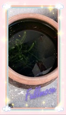 台南~鰻丼作料理:門口前的魚缸