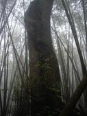 南投魚池水社大山登山步道、卜吉山:IMGP2189.JPG