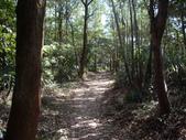 新北林口頂福巖森林步道:IMGP0968.JPG