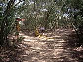 台中大肚環保公園登山步道:IMGP6229.JPG