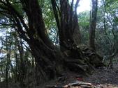 台中和平閂山鈴鳴山(DAY1-閂山):DSCN4188.JPG