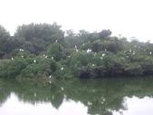 宜蘭羅東林業文化園區:IMGP5572.JPG