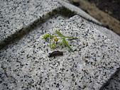 螞蝗:IMGP1604.JPG