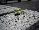 螞蝗:IMGP1605.JPG