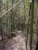 新竹芎林西坑山、南何山、南何山南峰、沙坑山、二確山:IMGP6456.JPG