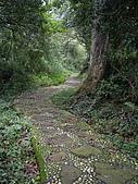 台中后里鳳凰山步道、觀音山步道:IMGP3829.JPG