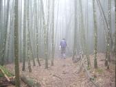 南投魚池水社大山登山步道、卜吉山:IMGP2190.JPG