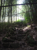 苗栗泰安象鼻古道、千兩山步道、千兩山:IMGP9863.JPG