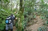 新竹尖石八五山古道、內鳥嘴山、北得拉曼步道:DSCN4968-70.JPG