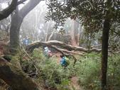 新竹尖石高台山、島田山:DSCN4882.JPG