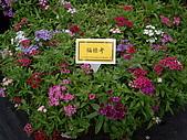 台中新社花海、暗影山:IMGP2583.JPG