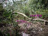 新竹芎林西坑山、南何山、南何山南峰、沙坑山、二確山:IMGP6459.JPG