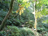 新竹尖石八五山古道、內鳥嘴山、北得拉曼步道:DSCN5020.JPG