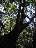 新竹尖石北得拉曼:IMGP0984.JPG