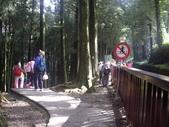 嘉義阿里山塔山步道、大塔山:IMGP0739.JPG