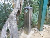 新竹尖石八五山古道、內鳥嘴山、北得拉曼步道:DSCN5036.JPG