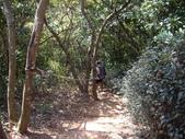 新北林口頂福巖森林步道:IMGP0972.JPG
