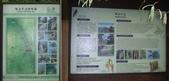 嘉義阿里山塔山步道、大塔山:IMGP0742-43.JPG