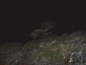 台東海端嘉明湖國家步道DAY-2(向陽山、三叉山、嘉明湖、向陽山北峰→嘉明湖避難山屋):DSCN3620.JPG