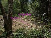 新竹芎林西坑山、南何山、南何山南峰、沙坑山、二確山:IMGP6462.JPG