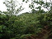 新竹芎林鹿寮坑桐花步道:IMGP3580.JPG
