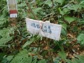 新竹尖石八五山古道、內鳥嘴山、北得拉曼步道:DSCN4980.JPG