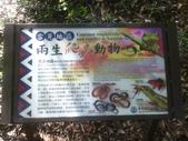 苗栗泰安雪見遊憩區、林間步道:IMG_0018.jpg