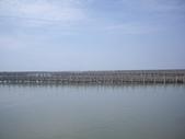 雲林口湖外傘頂洲:IMGP8191.JPG