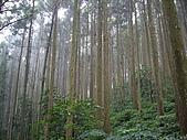 苗栗南庄光天高山、向天湖山、神仙谷:IMGP0859.JPG