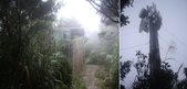 南投鹿谷南鳳凰山、天文台:IMGP6470-71.JPG