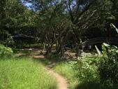 新北林口頂福巖森林步道:IMGP0976.JPG