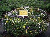 台中新社花海、暗影山:IMGP2588.JPG