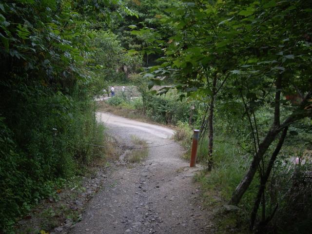 新竹尖石鎮西堡B區神木群:IMGP2426.JPG