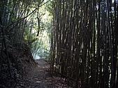 新竹尖石霞喀羅古道(養老段):IMGP1039.JPG