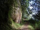 嘉義阿里山塔山步道、大塔山:IMGP0762.JPG