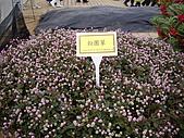 台中新社花海、暗影山:IMGP2589.JPG