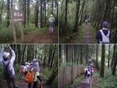 嘉義阿里山對高岳:IMGP0684-87.JPG