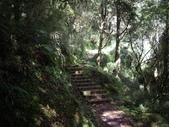 嘉義阿里山塔山步道、大塔山:IMGP0764.JPG