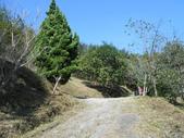 苗栗南庄橫屏背山:DSCN4903.JPG