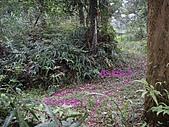 新竹芎林西坑山、南何山、南何山南峰、沙坑山、二確山:IMGP6471.JPG